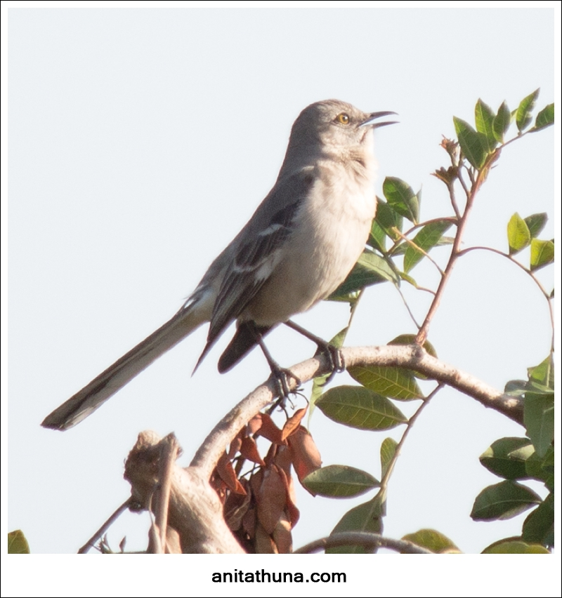 birdie 001