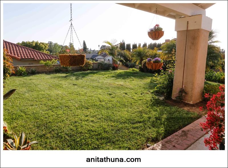 grass-_D0A2090
