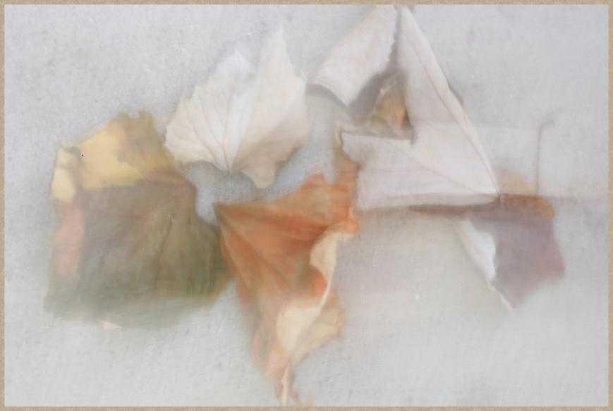 blur-_D0A0727T