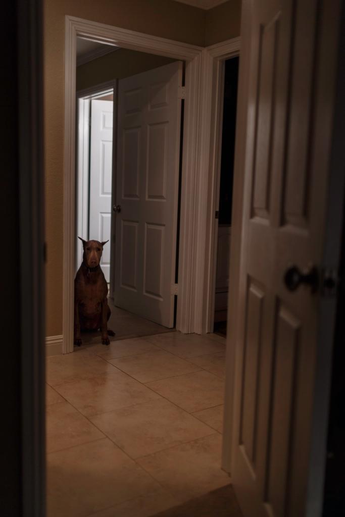 bella door 001