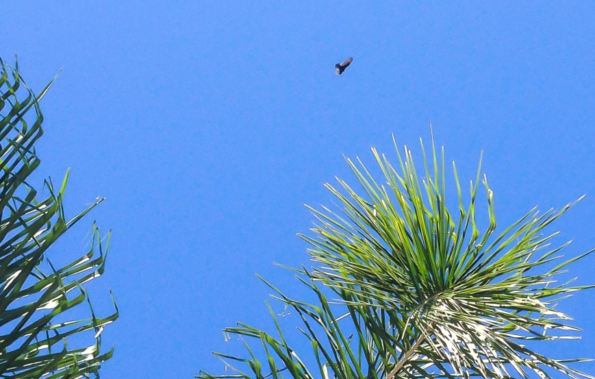 hawk and bees-2014-01-14 10.11.53
