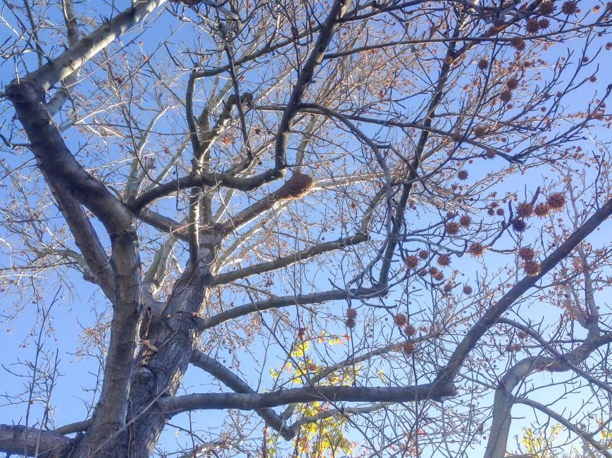 hawk and bees-2014-01-14 10.29.39