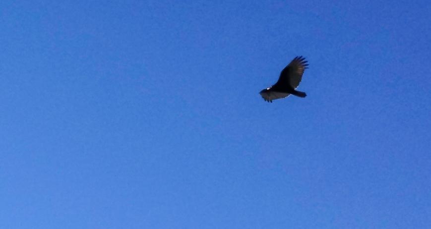 MVL bird 002 int