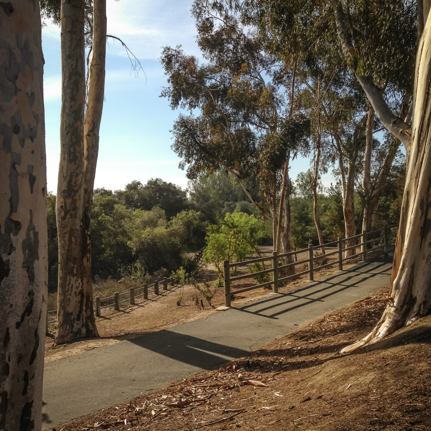walk 1 week-2014-01-08 10.58.54