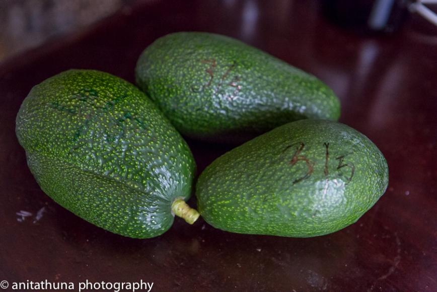 Avokado-1