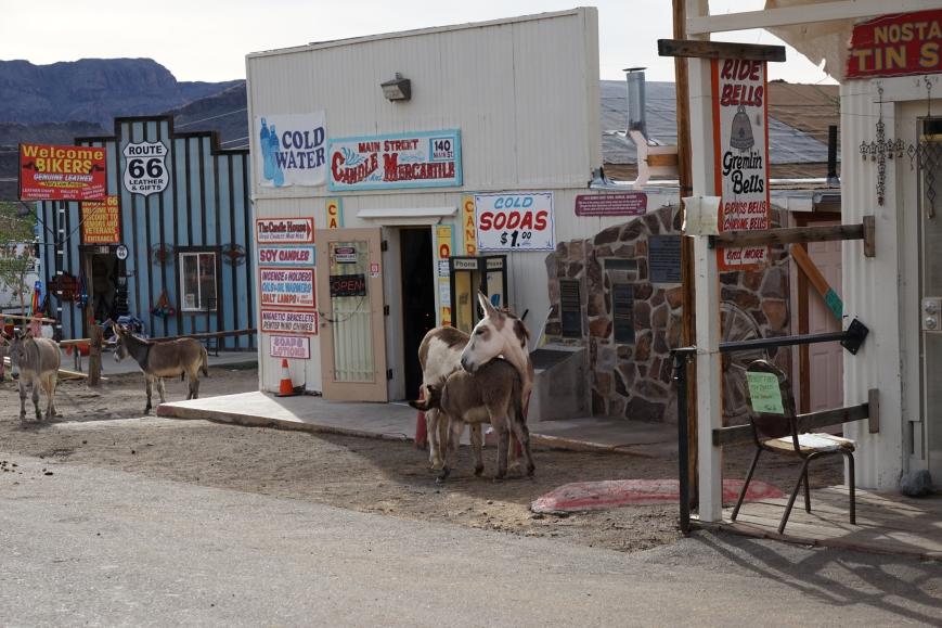 oatman town081