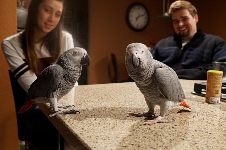 birdies-1