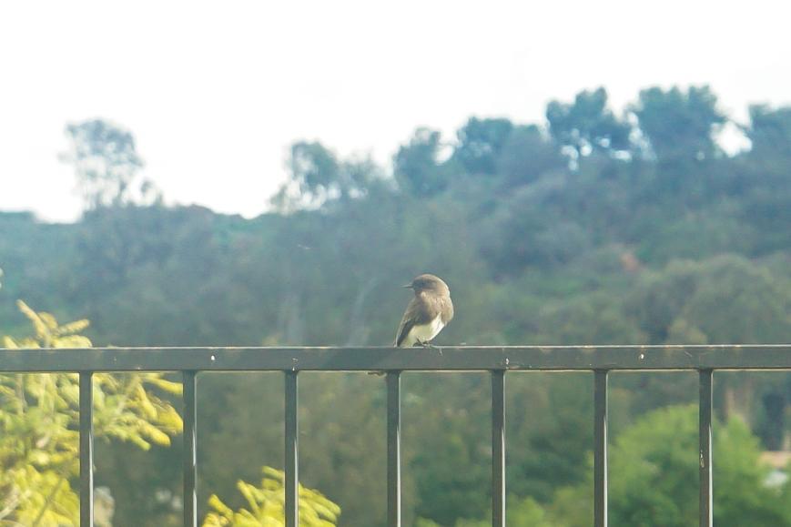 bird (1 of 2)