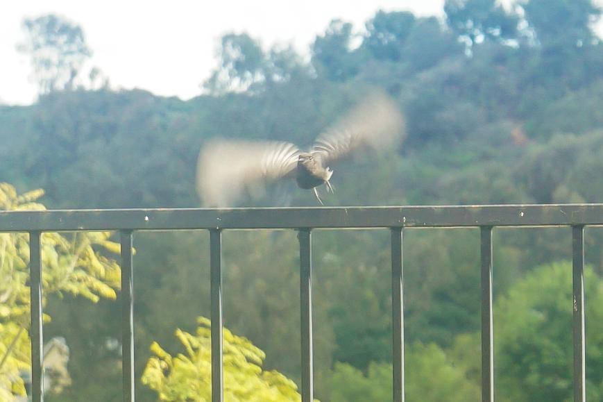 bird (2 of 2)