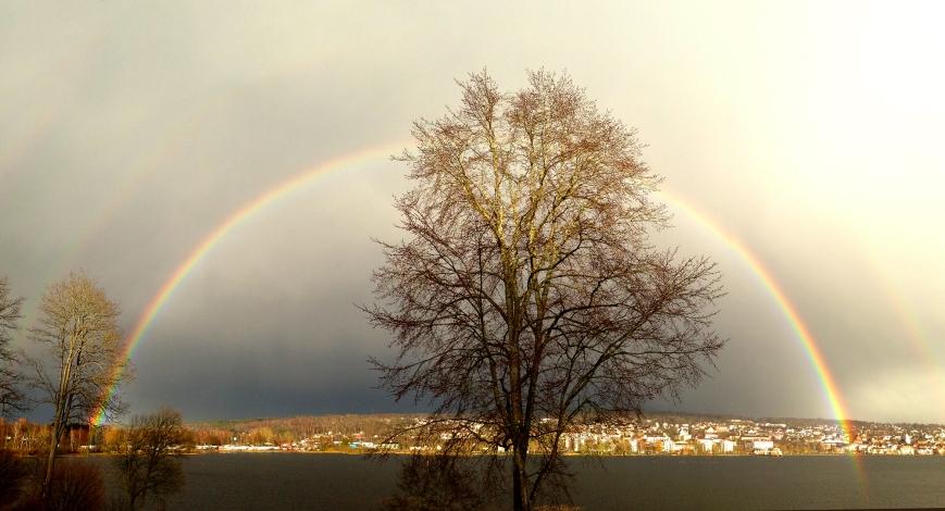 rainbow2 300