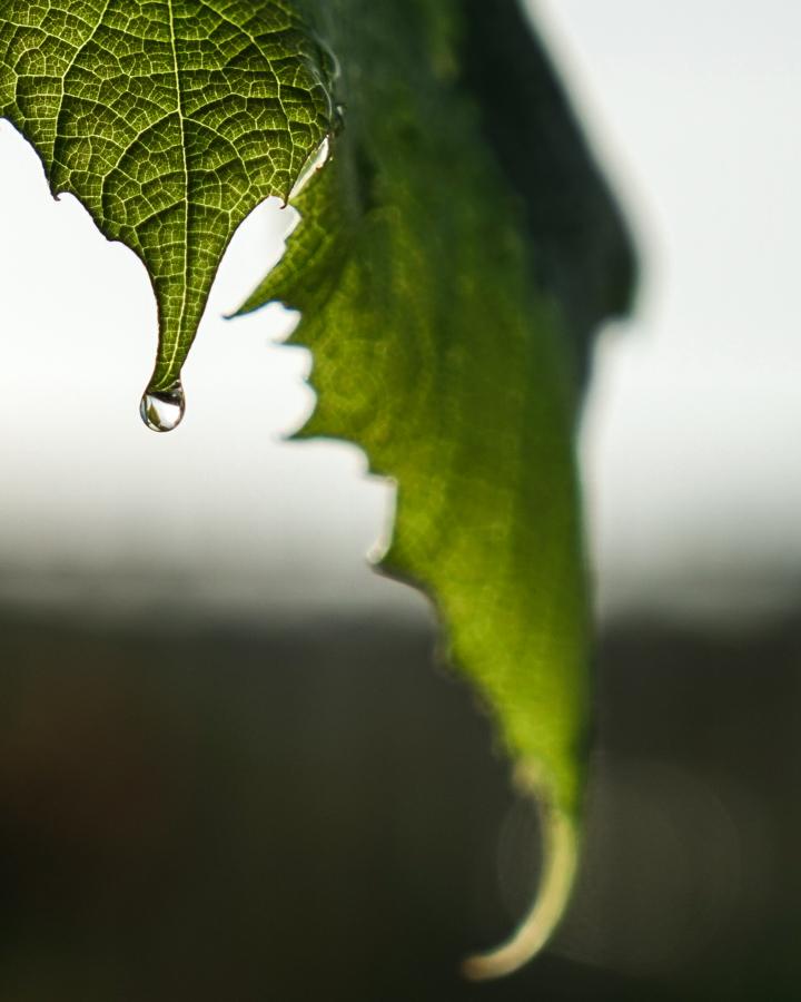 droppe-00871