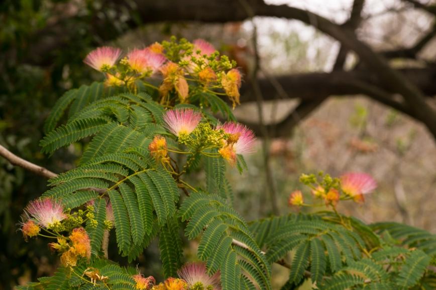 glen flowers-04526